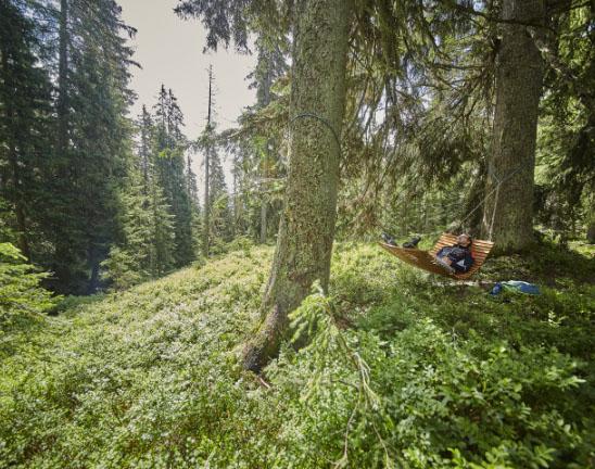 Entspannung in der Natur im Sommer in Saalbach Hinterglemm, Waldspaziergänge, Wandern und Biken - Pension Lederergütl